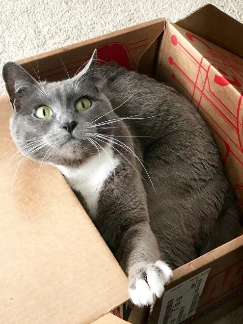 Abby & The Box